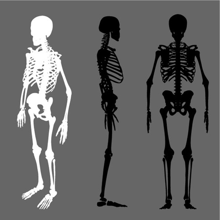 morbid: vector skeleton silhouette set Illustration