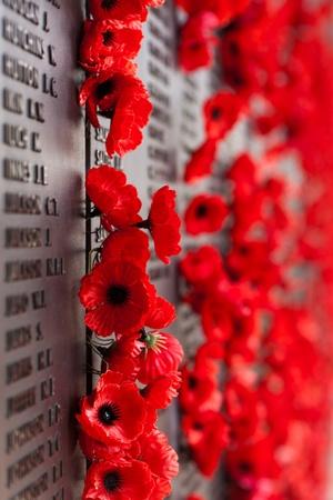 world war one: Australia War Memorial Red Poppy Flower