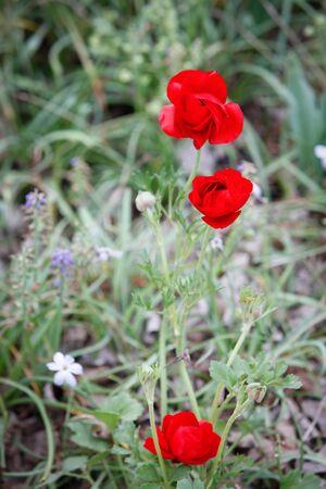 Three Beautiful Flowers