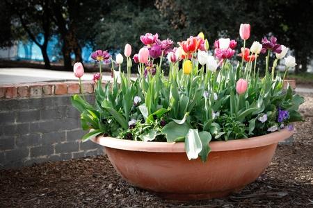 Tulips Garden Ideas Design Stock Photo