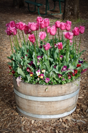 Tulips Garden Ideas In Barrel Stock Photo - 15680863