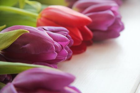 tiedup: large buds of tulips on the table