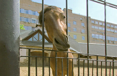 unexpected: Unexpected cheerful frame of the horse