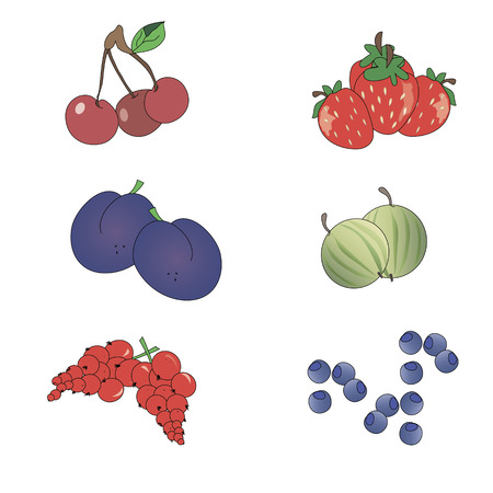 Set various berries on a white background (strawberry, plum, currant, gooseberry, blueberry, cherry). Vector