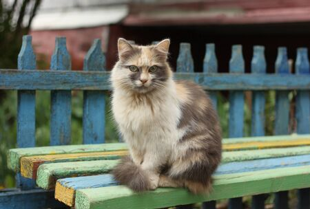 The three-color image of a large cat sitting on the old bench photo