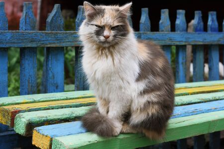 well maintained: Multi-colored cat sitting on a bench near an old fence with peeling paint