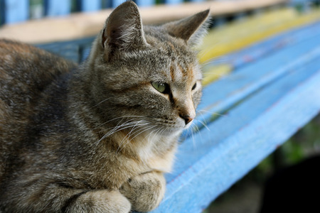 well maintained: Gray tabby cat lying on a bench with peeling paint Stock Photo