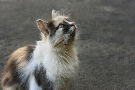 well maintained: Young fluffy kitten sitting on the pavement and looking up Stock Photo