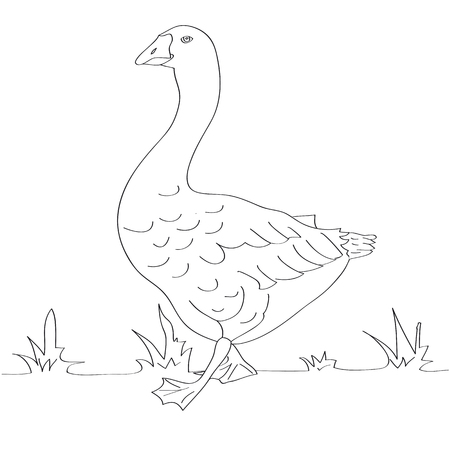 basis: The basis for painting. Big goose is depicted in the grass.