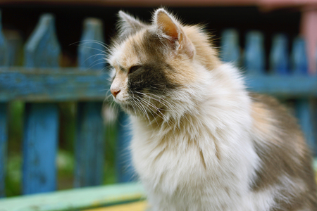 scowling: Fluffy fat cat sitting on the bench, closeup Stock Photo