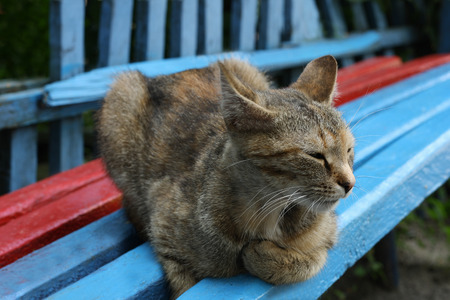look after: Tabby cat lying on colorful wooden bench, relaxed and sleepy.