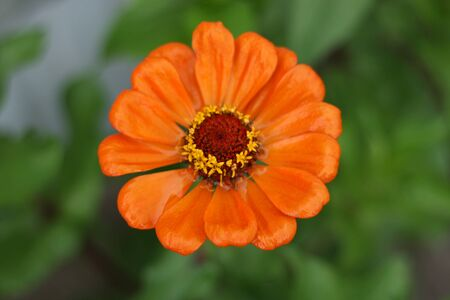 and is favorable: The photographic image of a large orange flower closeup.