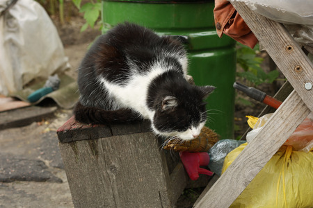 dumped: Fluffy two-tone black and white cat sitting among old dumped in a bunch of outdoor things.