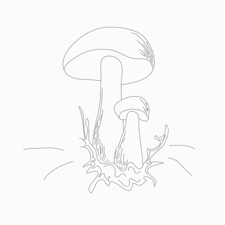 spawn: A simple image of two mushrooms on the grass.