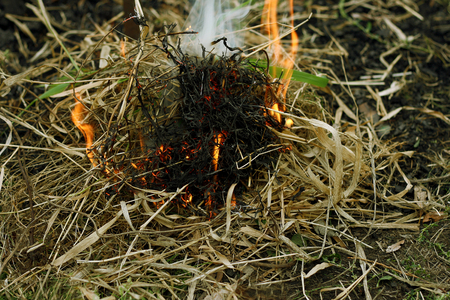 dry grass: Autumn dry grass close up. A small incipient fire. lit from the dry grass.