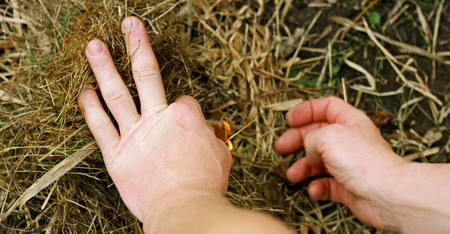 igniting: Image closeup of a mans hand, igniting the grass. Stock Photo