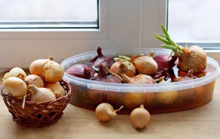 cebolla: Brotación cebollas en el alféizar de la ventana en casa. En el primer plano es una cesta de mimbre con un arco de edad. En el fondo de la cebolla en un recipiente con agua. La cebolla, el joven flecha verde.
