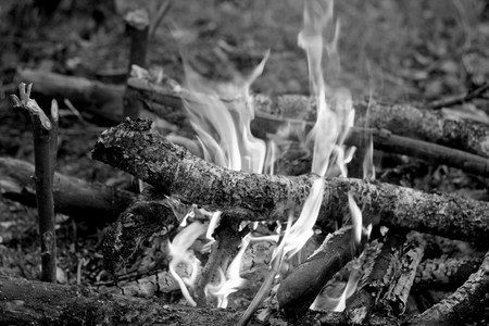 ignited: The fire, which ignited in the forest. Black and white image of fire in nature. Kindled a fire using dry twigs, sticks and firewood.