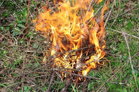 flare up: The fire, which ignited in the forest. A fire made of dry twigs on the green grass.