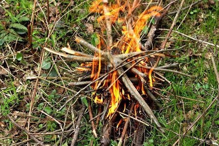 flare up: A fire in the woods. Kindled a fire with dry twigs and sticks on the green grass. Stock Photo