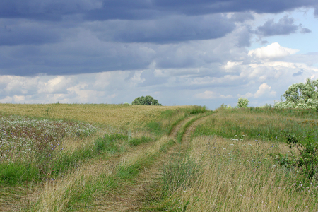strips away: Rural landscape. Thumb wheel road among the dense green grass field. Over the road storm clouds are gathering. Stock Photo