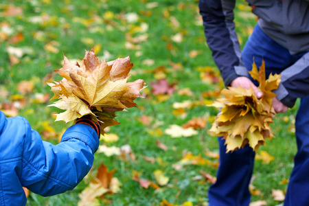 Autumn walks in the fresh air. Father and son collecting autumn bouquets of colorful fallen maple