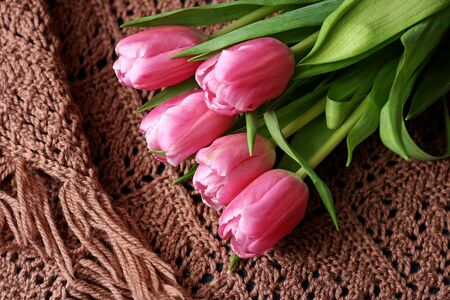 A bouquet of tulips, which lies on a brown knitted ladies shawls.
