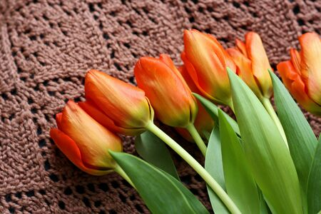 Bouquet of tulips, which lies on a brown knitted ladies shawls. Stock Photo