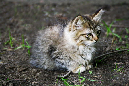 Homeless cats. Ruffled little grey kitten sitting on the ground among the green grass.
