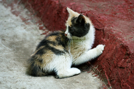 Homeless cats. Little stray kitten with the original colour. Stock Photo