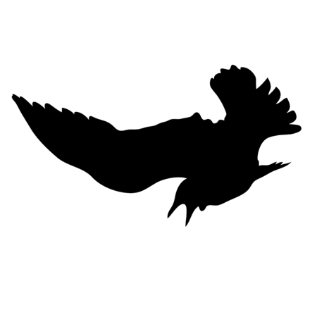 Black silhouette of a gull. The bird flies and spreads its wings. Vector illustration. Banco de Imagens