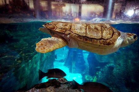 large turtle: Large turtle in Istanbul Aquarium