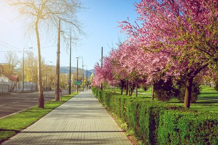sarajevo: Spring bloom in Sarajevo, Bosnia and Herzegovina Stock Photo