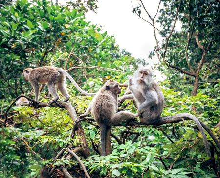Monkeys in Ubud Monkey Forest, Bali, Indonesia