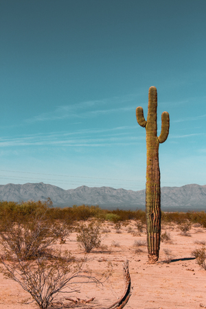 cactus in arizona landscape