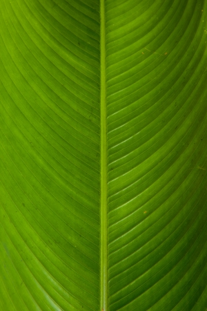 backlite: Green texture Stock Photo