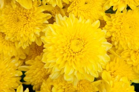 carroty: marigold flowers Stock Photo