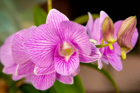 violet flowers of orchid  photo