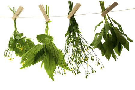 Herbs hanging upside-down    photo