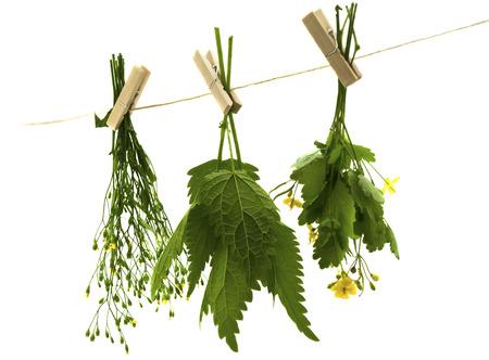 Herbs hanging upside-down    photo