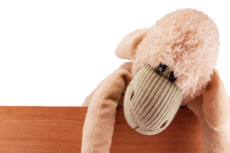 toy sheep beige sits on the board fence keeps isolated photo
