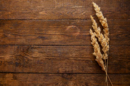 dried flowers in a minimalist style lie on a brown wooden natural background