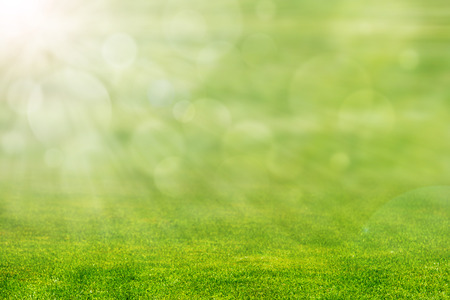 green background: Green grass with ray of light and blurred background