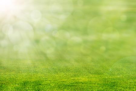 Groen gras met straal van licht en onscherpe achtergrond Stockfoto