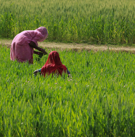 Farmers working by hand in green field
