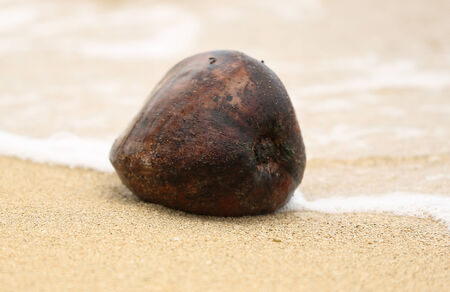 Coconut on Beach photo