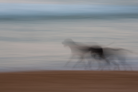 Abstract dog running with ocean and sky background with blurred panning motion causing soft feel Banco de Imagens