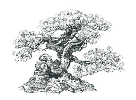 Bonsai de coníferas forma curva. Foto de archivo - 70717748