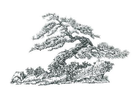 Coniferous bonsai curved shape.