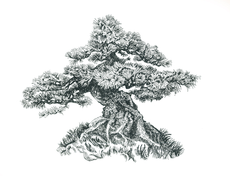 Small conifer bonsai.Tree on the hill.Black and white drawing. Illustration of a small bonsai. Imagens